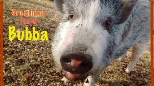 Meet Bubba -Camp Corner Newsletter 3/17
